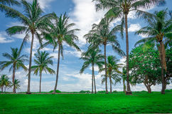 View of Miami Beach with Palm trees. As background in Florida, USA Stock Image