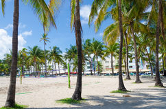 View of Miami Beach with Palm trees Royalty Free Stock Photo