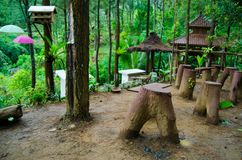 View in the middle of pine forest. At putri maron park, Trenggalek Indonesia Stock Photography