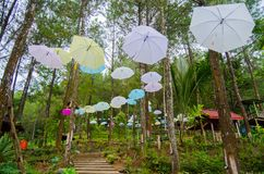 View in the middle of pine forest. At Putri Maron Park, Trenggalek Indonesia Stock Images