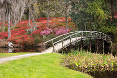 Spring Azaleas Bloom in Southern Plantation Stock Image