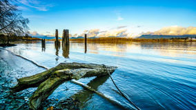 View of the mighty Fraser River in BC Canada Royalty Free Stock Photography