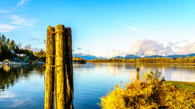 View of the mighty Fraser River in BC Canada Royalty Free Stock Photos