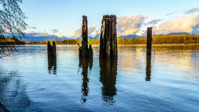 View of the mighty Fraser River in BC Canada Royalty Free Stock Photo