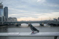 View from Millenium bridge, london Royalty Free Stock Photography