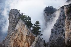 View of misty fog mountains - rock with pine tree. At sunset stock photo