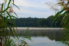 View on misty lake in the morning. View on misty lake and forest beyond in the morning through reed royalty free stock images