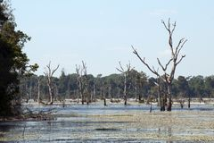 View of moat with dead trees  around Preah Neak Pean temple. Scene around the Angkor Archaeological Park. The site contains the remains of the different capitals Royalty Free Stock Photo