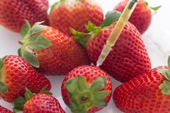 View of the Modified food concept / strawberries with punched needles and syringes. Strawberries with punched syringes as a concept for modifying food Stock Photo