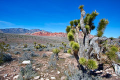 View of Mojave Desert. Royalty Free Stock Images