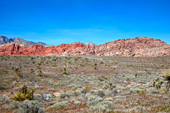 View of Mojave Desert. Royalty Free Stock Photography
