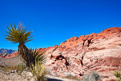 View of Mojave Desert. Stock Photo