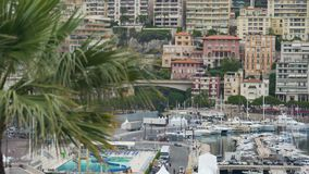 View of Monaco harbor with many yachts from behind exotic palm tree branch stock footage
