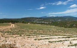 Mont-Ventoux - Vaucluse - France. View of Mont-Ventoux - Provence - Vaucluse - France Stock Photography