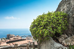 View of Monte Carlo and the Mediterranean Sea. From the garden of exotic plants Stock Photos