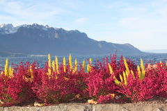 View of Montreux Royalty Free Stock Photography