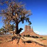 View of Monument Valley and tree Stock Photography