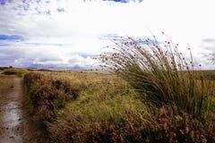 View of moorland Exmoor. Devon cloudy royalty free stock photo