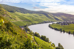 View on Moselle and vineyards in Germany Piesport. View on Moselle and vineyards and the village Piesport Germany stock photography