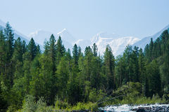 View of Mount Belukha. Trekking in the Altai Mountains Royalty Free Stock Images