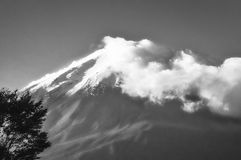 View Of Mount Fuji from Fujikawagichiko resort in Japan in black. View Of Mount Fuji from Fujikawagichiko resort, with cloud cover and a tree in the foreground royalty free stock images