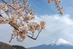 View of Mount Fuji and full bloom pink cherry trees flowers at Lake Kawaguchi with clear blue sky natural background. View of Mount Fuji with full bloom pink stock photos