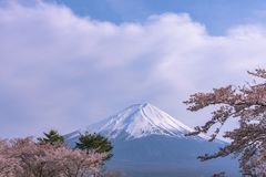 View of Mount Fuji and full bloom pink cherry trees flowers at Lake Kawaguchi with clear blue sky natural background. View of Mount Fuji with full bloom pink royalty free stock photo