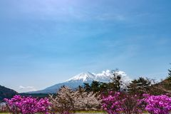 View of Mount Fuji and full bloom white pink cherry tree flowers at Lake Shoji. Shojiko Park in springtime sunny day with clear blue sky natural background royalty free stock photo