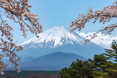 View of Mount Fuji and full bloom white pink cherry tree flowers at Lake Shoji. Shojiko Park in springtime sunny day with clear blue sky natural background stock photos
