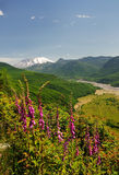 A view of mount saint helens Stock Photography