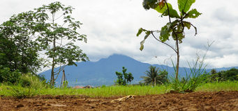 View of Mount Salak with green bush photo taken in Bogor Indonesia Royalty Free Stock Photos