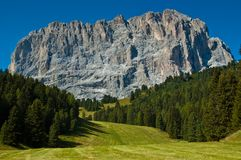 View of Mount Sassolungo. Plan de Gralba: meadow, pine forest and Sassolungo - Dolomite, Italy Royalty Free Stock Images