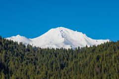 View of Mount Shasta peaks with alpine forest Stock Photography