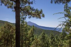 View of Mount Teide between conifers, Las Lagunetas, Tenerife, Canary Island, Spain Royalty Free Stock Images