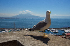View of Mount Vesuvius from Castel dell`Ovo Seagull portrait Royalty Free Stock Photography