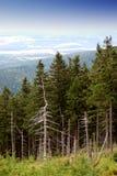 View on the mountain. View on the dead trees in the Karkonosze mountain, Poland, Europe Stock Photo