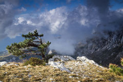 View from the mountain Ai-Petri, Crimea, Ukraine. Amazing view from the mountain Ai-Petri, Crimea, Ukraine, with a tree on the foreground royalty free stock photography