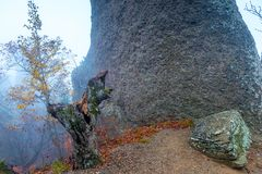 Mountain in the autumn forest during the mystical fog stock images