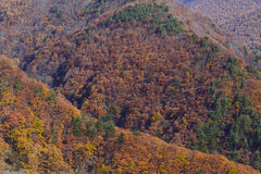 View of mountain with colorful leaves. Background Royalty Free Stock Photo