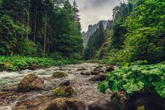 Mountain creek / river flowing between the forest. stock photo