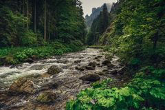 Mountain creek / river flowing between the forest. stock photos