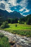 Mountain creek / river flowing between the forest. royalty free stock image