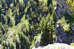View from mountain edge down to the vertical rocks and green pine trees stock photo