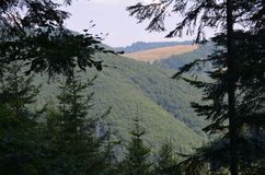 View of a mountain. And the field and tree. Of the forest Royalty Free Stock Photography