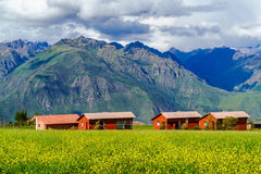 View of mountain and the field of yellow flower Royalty Free Stock Image