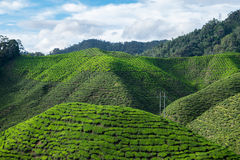 View of mountain filled with tea plantations and blue sky in Cam. Eron Highlands, Malaysia Royalty Free Stock Images