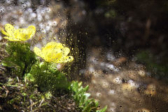 View of the mountain flowers through the glass Royalty Free Stock Image