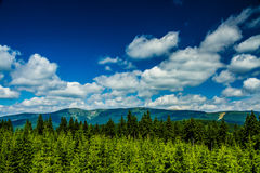 View of Mountain Forest with Blue Sky and Clouds Stock Image