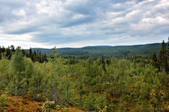 View from the mountain on forest expanses Stock Photography