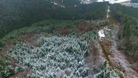 View on mountain forest and ski trails. Aerial photo from quadrocopter stock video